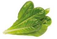 Romaine Lettuce Refill