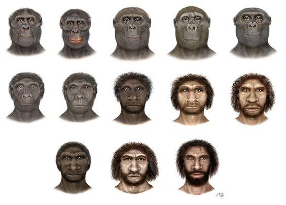 Изображены лица: Australopithecus afarensis, Australopithecus africanus, Paranthropus aethiopicus, Paranthropus boisei, Paranthropus robustus, Homo habilis, Homo rudolfensis, Homo ergaster, Homo erectus, Homo heidelbergensis, Homo rhodesiensis, Homo neanderthalensis, Homo sapiens.