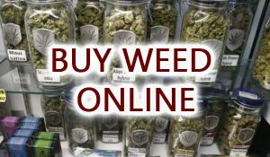 online dispensary uk, order kush online uk