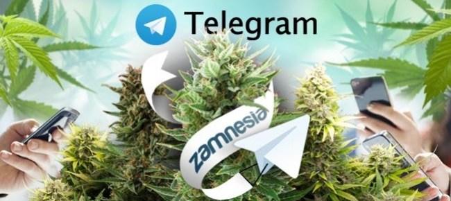 Best Telegram weed Plug