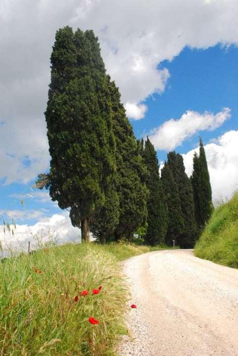 Toscana_201305_212
