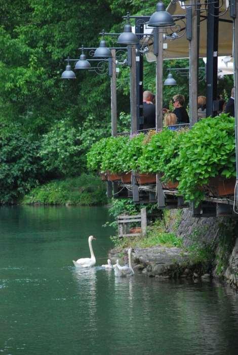 Borgetto sul Mincio - Swans