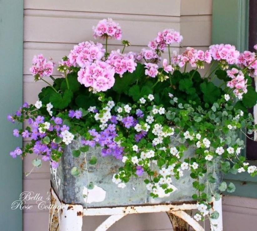 flower pic #1