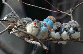 delirio pájaros
