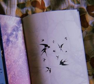 Todos os Pássaros no Céu