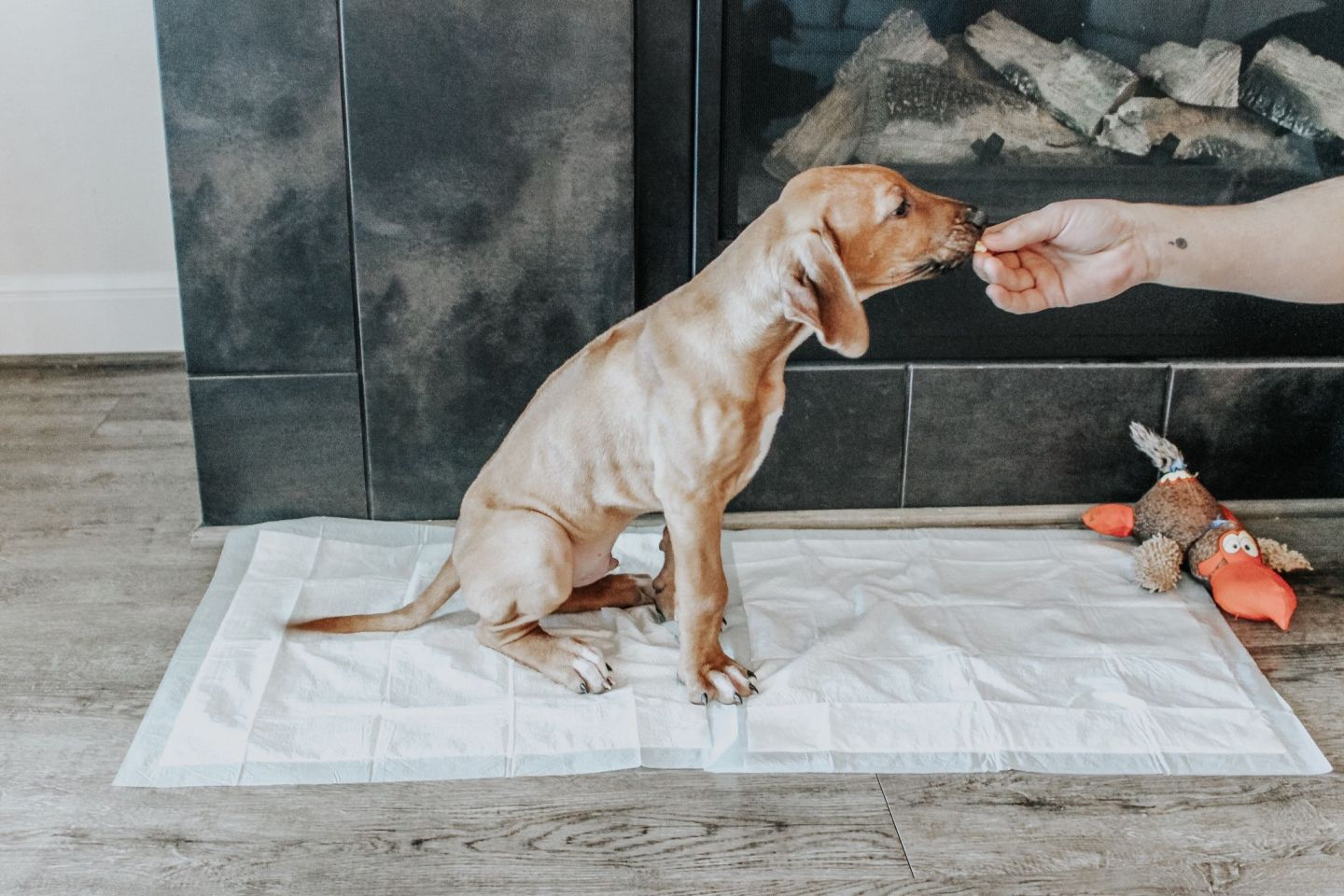 My Top Tips for Potty Training Your Puppy Super Fast (even in the Winter!) Dog training.