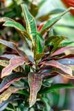 plant-2903983_1920