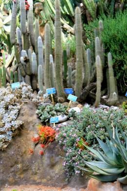 deserto - orto botanico Napoli