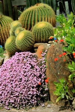 deserto - orto botanico Napoli 2
