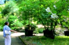 fiori paradiso