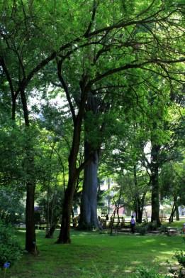 orto botanico napoli 2