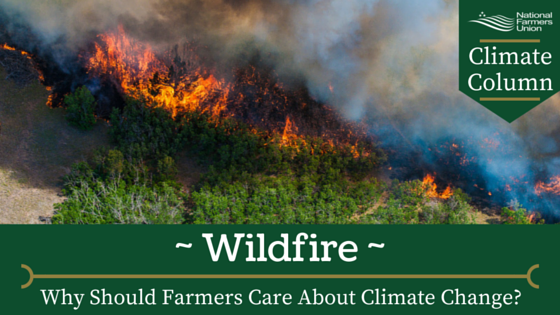 Climate Column - Wildfire
