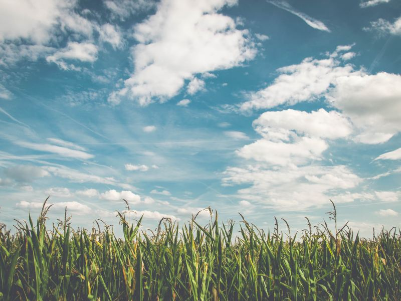 EPA's RFS Obligations Are Another Setback for American Farmers