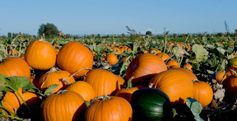 Westham Pumpkin Patch Farm Fall Activities