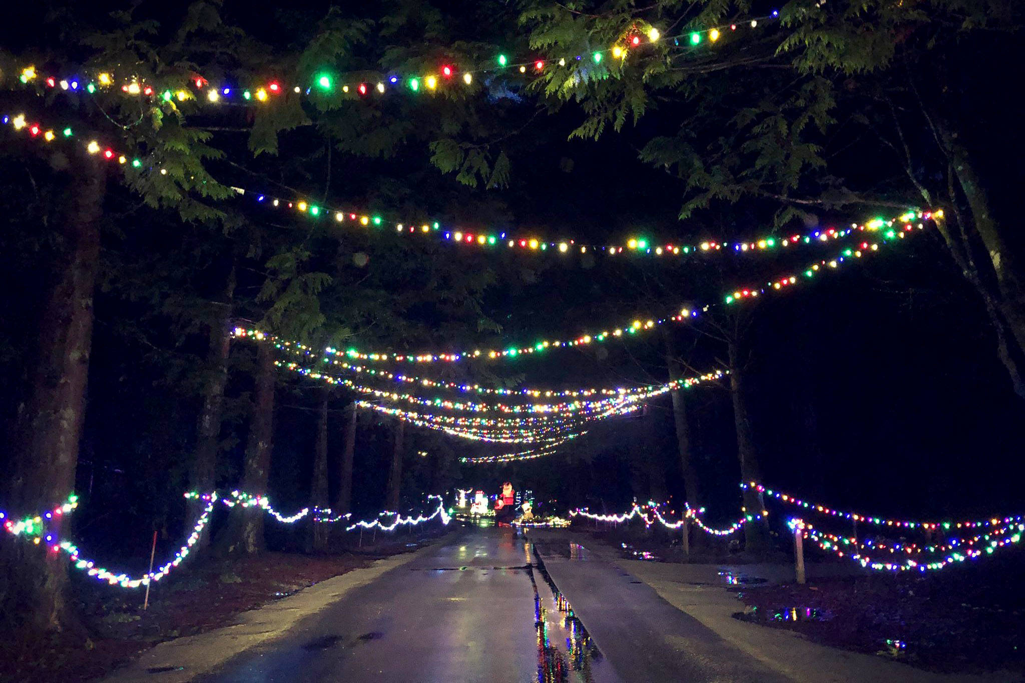 Williams Park Christmas Lights