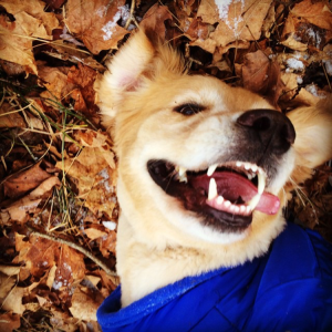 Copper enjoying the leaves in NY
