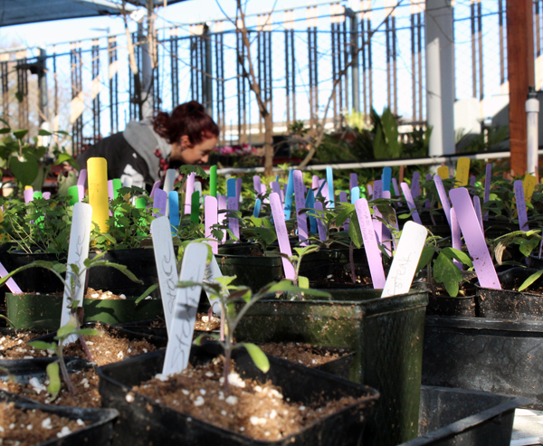 Horticulture club member Kaci Hurst helps set up for the first plant sale of the semester. Photo by Catlan Nguyen