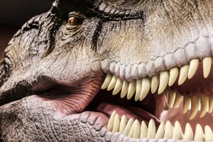 T-rex had the largest tooth of any carnivorous dinosaur. They measured 8-12 inches, roughly the size of a banana!