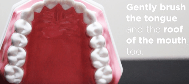 Hold the brush vertically to get behind the front teeth