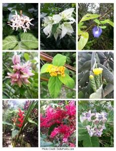 flowers grand cayman botanical garden east end delta points blog