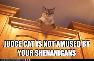 shena cat judge not happy