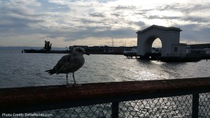 seagull at fishermans wharf sfo delta points blog