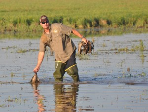 Aaron Yetter retrieving teal ducks from the water.