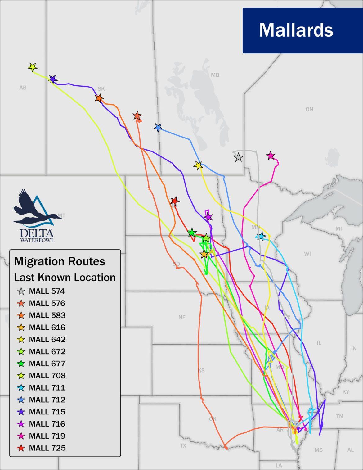 mallard migration movements