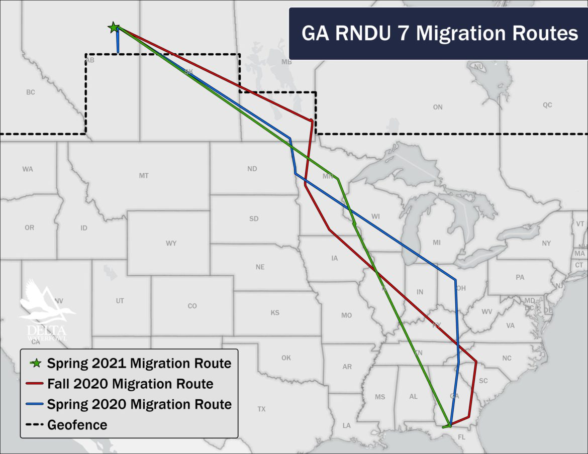 spring tracking duck movements map delta waterfowl