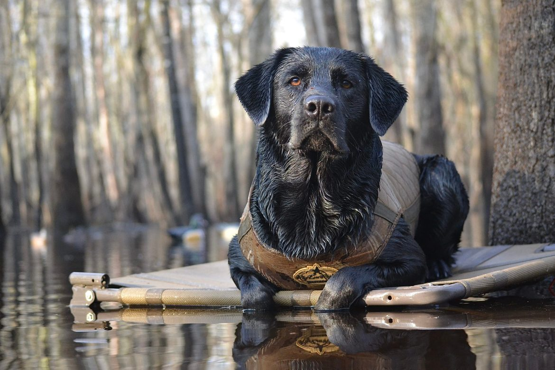 "Duck Dog Photo Contest Winner ""Mean Muggin."""