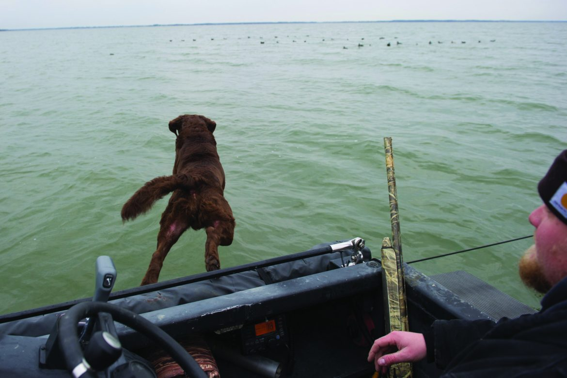 Chesapeake retriever jumping out of a boat into the water