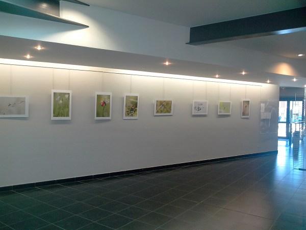 Délucine exposition Wormhout