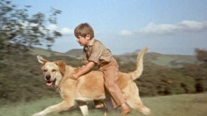 old yeller Movies that ruined my childhood disney