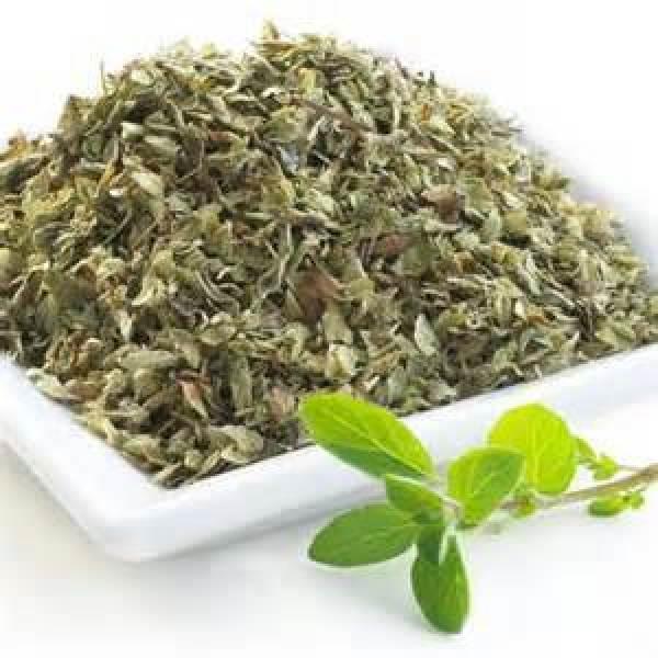 230-plantas-medicinales-mas-efectivas-y-sus-usos-oregano-chile-cribado
