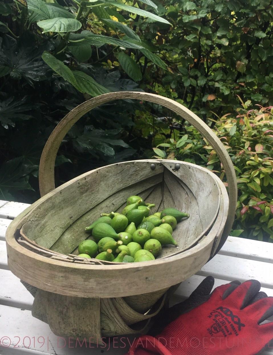 groene gesuikerde vijgen