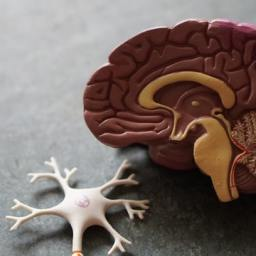 Which brain areas are affected by dementia?