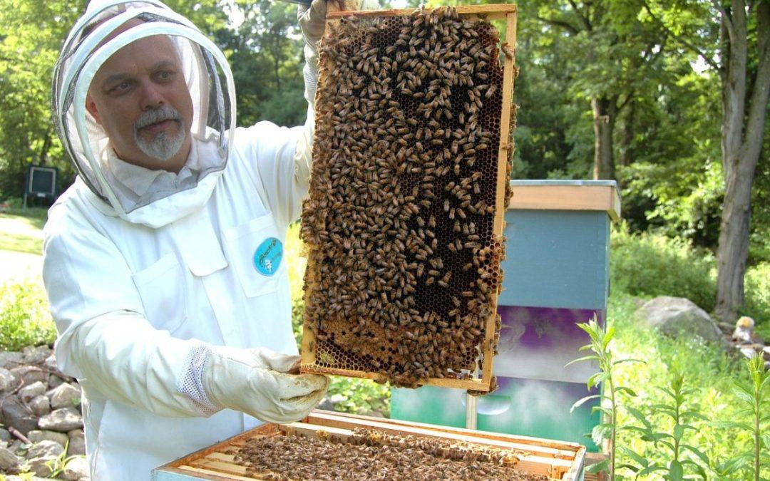 Aumenta 34 por ciento la producción de miel mexicana en el primer cuatrimestre del año