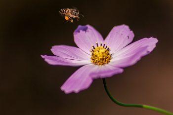 Las mejores flores para las abejas