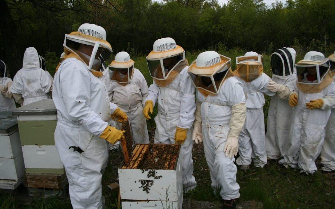 Localización del apiario