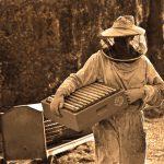 Establecimiento del apiario