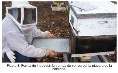 Forma de introducir la trampa de varroa por la piquera de la colmena