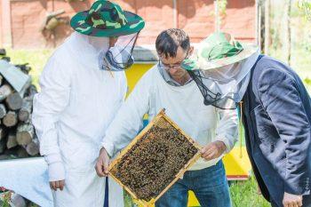 Mejorar apiario