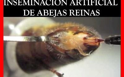 INSEMINACIÓN ARTIFICIAL DE ABEJAS REINAS