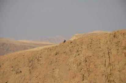 das wüstengebirge um metzoke dragot / slopes drghout. foto: irina wernbacher