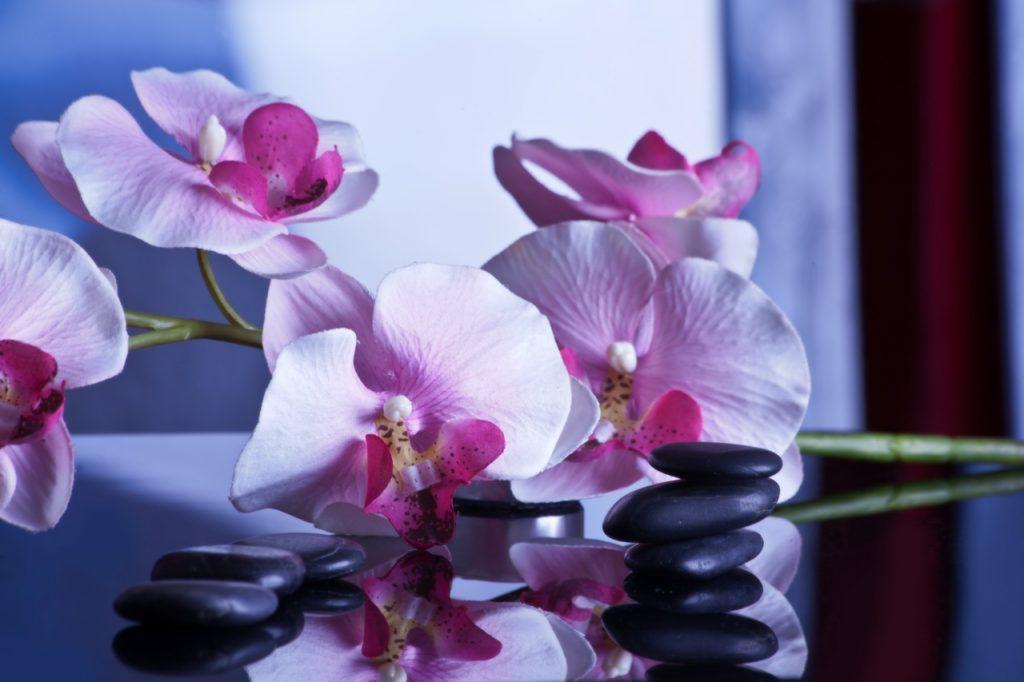 blossom plant flower purple petal relax 762344 pxhere.com