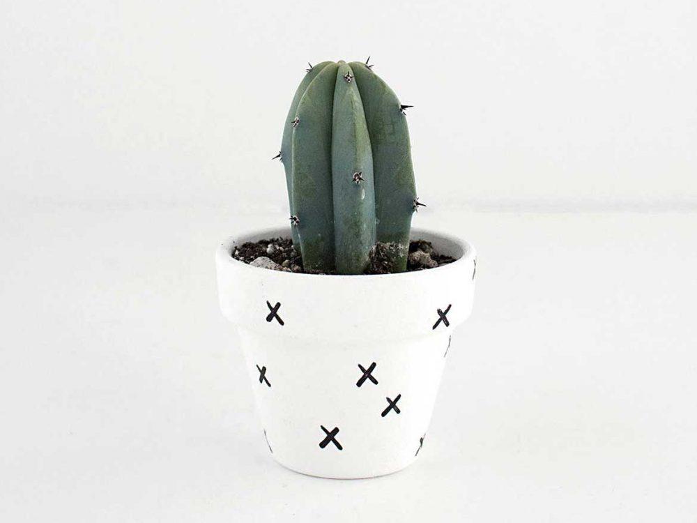 Cactus dolor sit amet