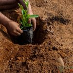 O Dia que ajudamos a reflorestar o Vulcão Poike na Ilha de Páscoa