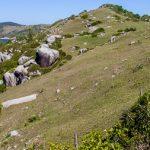 Conheça a trilha que vai da Praia do Rosa até a Praia da Ferrugem, em Santa Catarina.