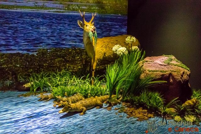 Museu da Terra Guarani - Animais empalhados