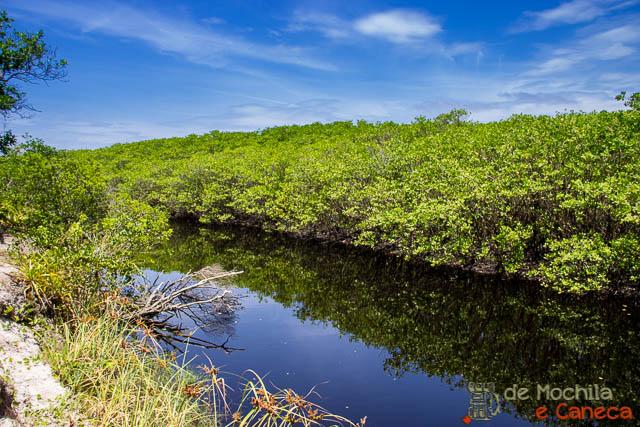 Ilha de Superagui-Mangue